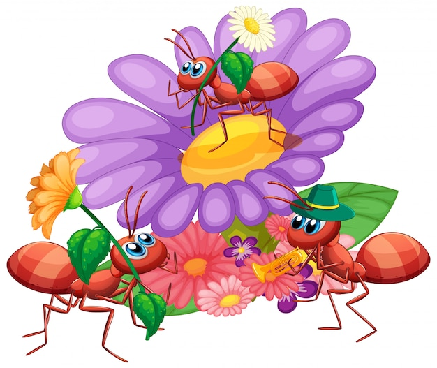 Ants with beautiful flower