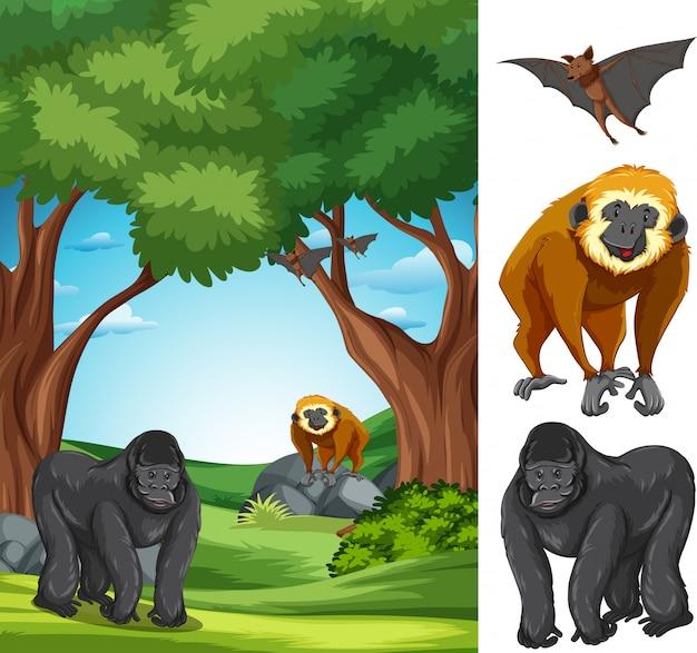 Ape in the nature landscape