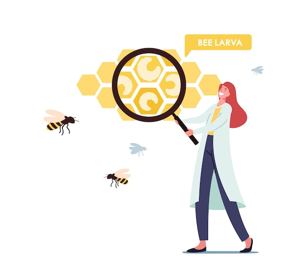 Apiary, biology science concept. tiny scientist female character wearing white medical labcoat with huge magnifying glass learning bees larva in huge honeycombs cells. cartoon vector illustration