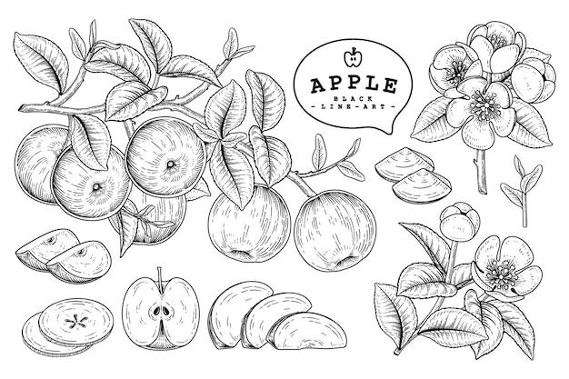リンゴの果実の絵