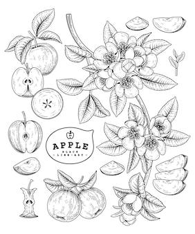 アップルフルーツの絵。
