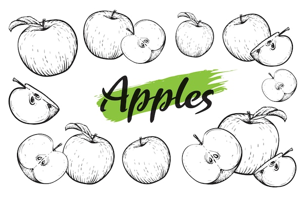 アップルフルーツセット。刻まれた黒と白のリンゴ。ビンテージ。手リアルな描画。