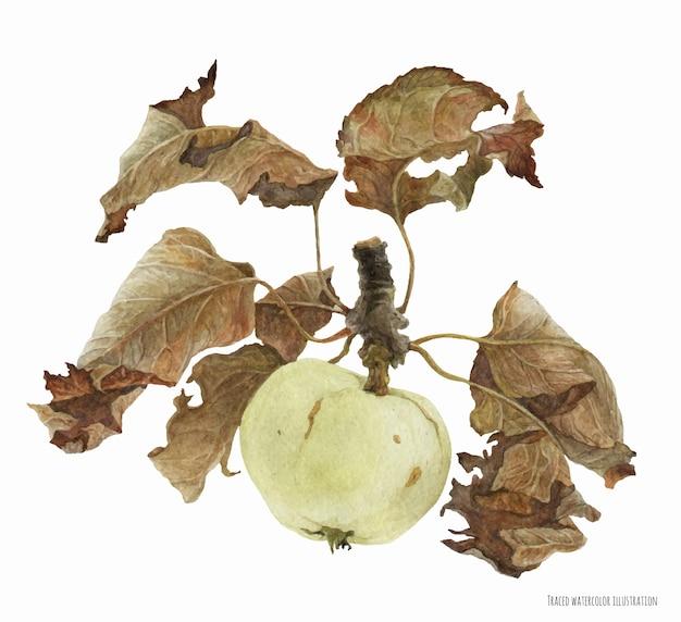 Яблочные фрукты с листьями, ботанические реалистичные акварельные иллюстрации