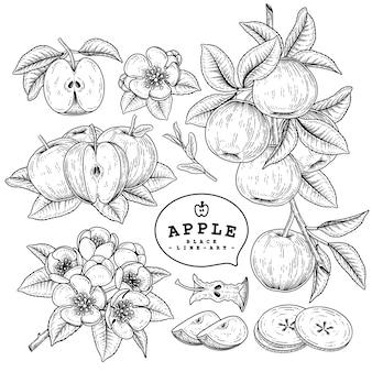 白で隔離されるアップル手描き植物
