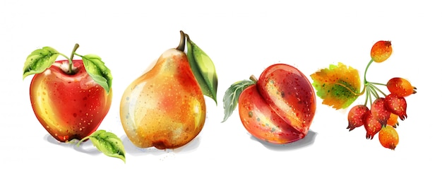 Apple, pear and peach watercolor set. colorful fruits detailed painted style