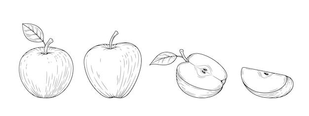 アップルは、白い背景で隔離の刻まれたヴィンテージイラストを設定します。有機食品手描きスケッチ。黒のアウトライン。