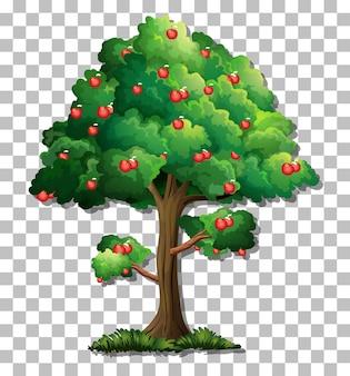 Яблоня на прозрачном фоне