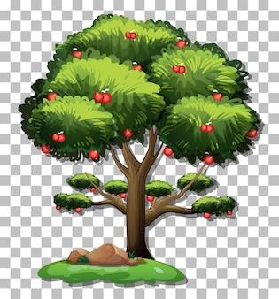 透明な背景の上のリンゴの木