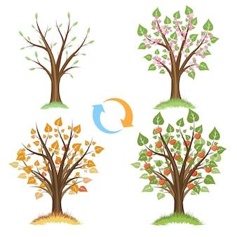 リンゴの木の季節サイクル。