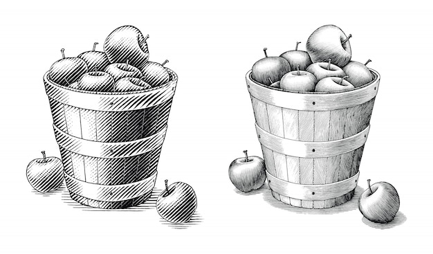 Apple в корзине ручной рисунок в винтажном стиле черно-белые картинки изолированные. сравните простые и сложные линии иллюстрации