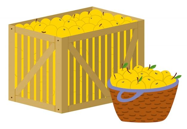 Apples in box harvesting season autumn fruits