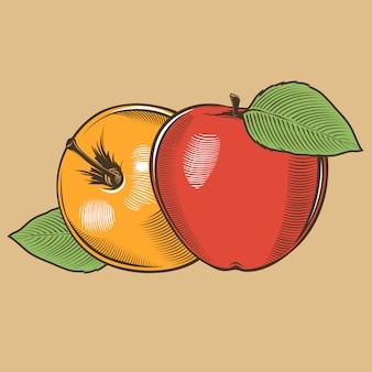 Яблоки в винтажном стиле. цветная векторная иллюстрация