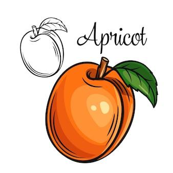 Значок рисования абрикоса