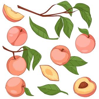 잎, 고립된 잎, 익은 과일이 있는 나뭇가지에 살구 또는 복숭아