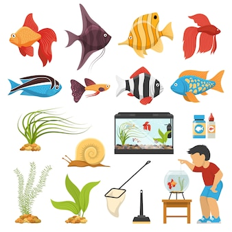 Aquaristics aquarium fish set