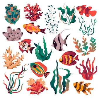 Аквариум и дикая жизнь моря и глубины дна океана