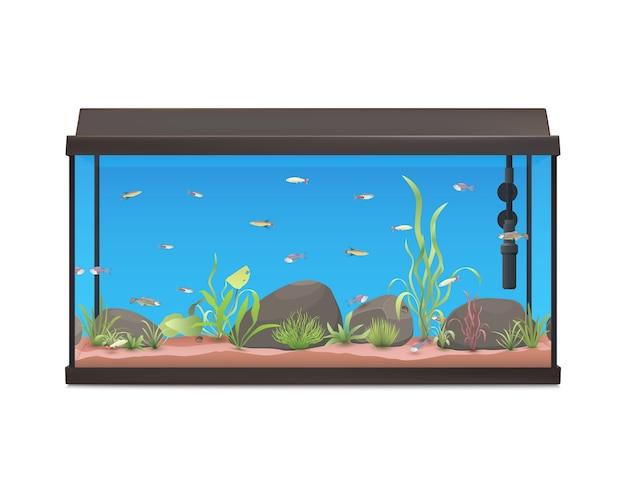 魚の石と植物の水族館のイラスト。白い背景の上の水槽。株式 。