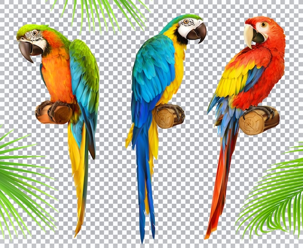 Ara parrot. macaw. photo realistic 3d  icon set