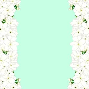 Arabian jasmine border on green mint background