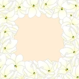 Arabian jasmine border