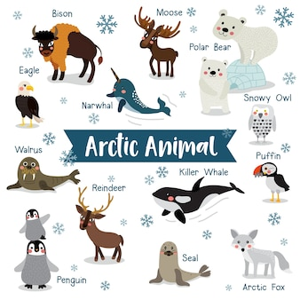 Arctic animal cartoon with animal names