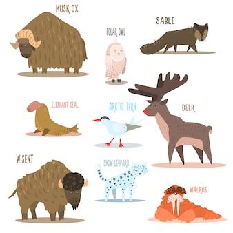 Arctic and antarctic animals, birds. illustration