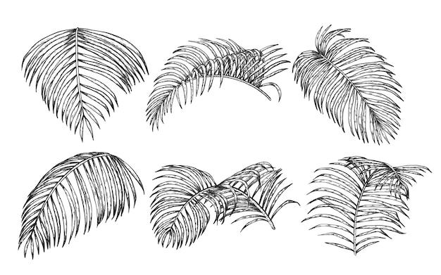 Areca plam leaf vector set on white background