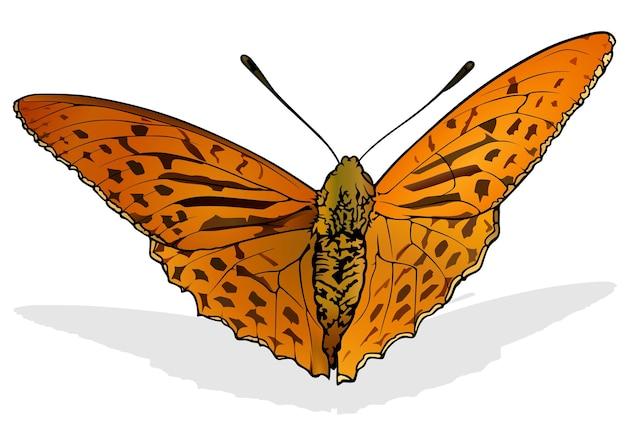 Argynnis anadyomene бабочка
