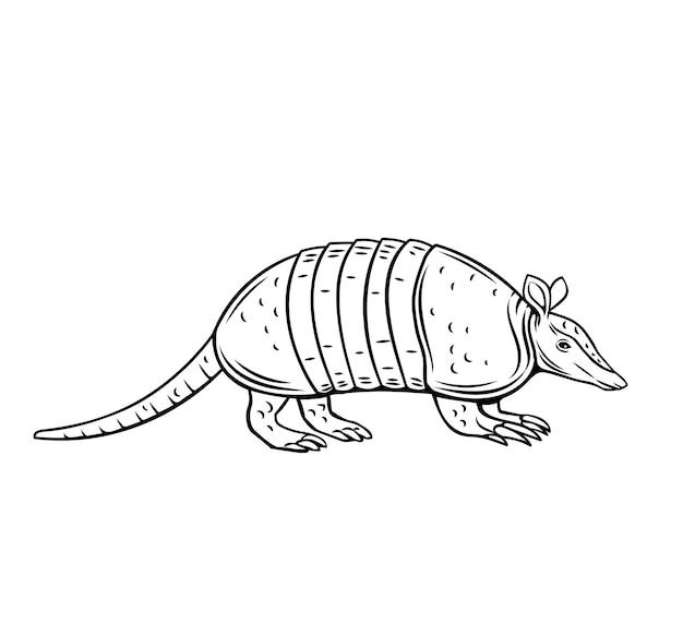 Значок броненосца. наброски животных изолированных иллюстрация для зоопарка