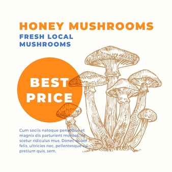 Armillaria advertisment template hand drawn honey mushrooms