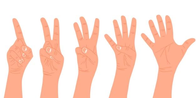Руки. считайте от одного до пяти.