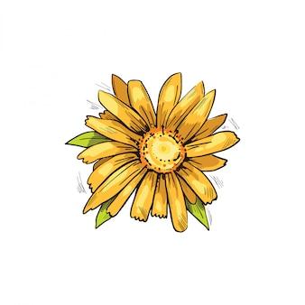 Иллюстрация вектора желтого цветка арники. цветущие цветы и зеленые листья. bucculatrix arnicella