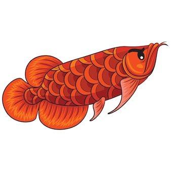 Arowana fish cartoon