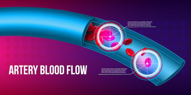 Artery red blood cells stream flow, vessel.