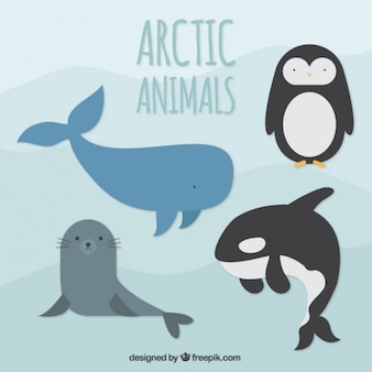 Artic animals