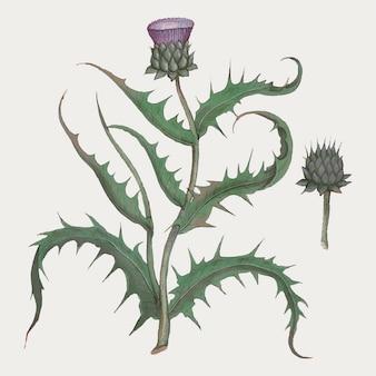 Artichoke flower in vintage style