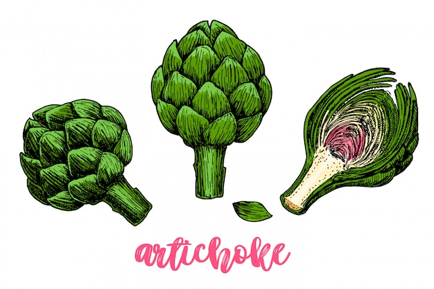 Artichoke hand drawn set.  illustration.  vegetable object. detailed vegetarian food drawing. farm market product. great for menu, label
