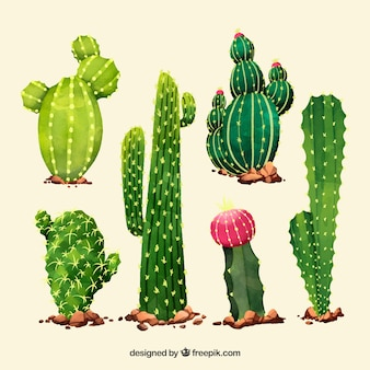 Artistc pack of watercolor cactus