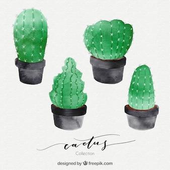Художественная коллекция акварельного кактуса