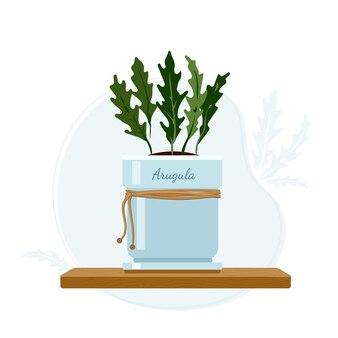 Рукола, садовая ракета или руккола съедобное однолетнее комнатное растение в масонном кувшине в составе кухонного подоконника из трав.