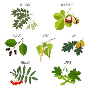 トネリコの葉、茶色の栗、緑のハンノキ、白樺のつぼみとカエデの鍵またはサマラ、どんぐりとオーク、白い背景で隔離の赤いナナカマドの果実。リアルな詳細イラスト