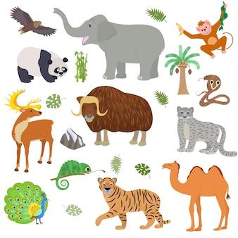 白い背景に分離された哺乳類のバッファロー象コブラのアジアの野生動物イラストセットでアジアの動物の野生動物のキャラクタートララクダパンダ