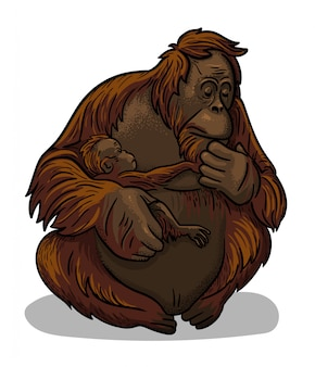 Asian animal female orangutan ape with baby-ape sitting isolated in cartoon style. educational zoology illustration