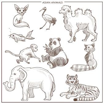 アジアの動物や鳥のベクトルスケッチ