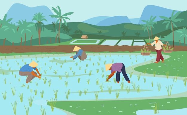 Asian rice fields with workers in conical straw hats. traditional agriculture.