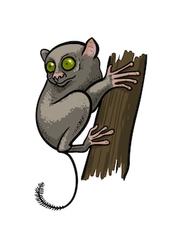 Asian tarsier loris primate monkey sitting on the tree isolated in cartoon style. educational zoology illustration, coloring book picture.