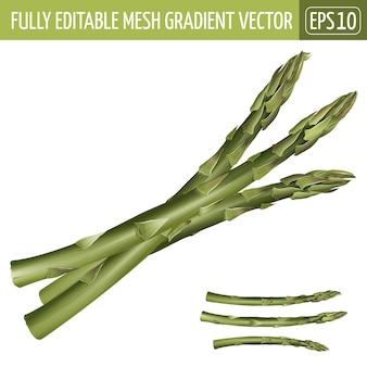 Asparagus illustration on white