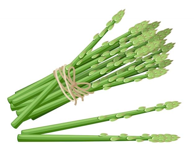 アスパラガスの植物。アスパラガスの束のイラストの茎。装飾的なポスター、エンブレム天然物、ファーマーズマーケットのイラスト。ウェブサイトページとモバイルアプリ