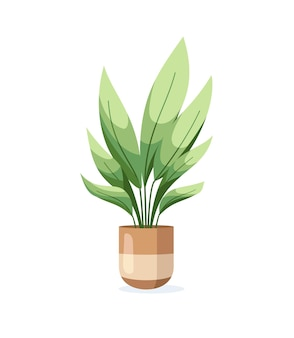 Aspidistra home plant in flower pot isolated on white background in flat style