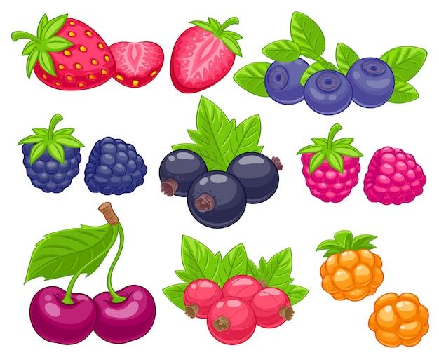 Assorted berries set  illustration.